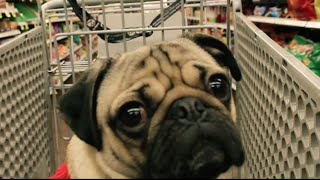 Doug the Pug - All I Want For Christmas Is Food [Parody] - YouTube