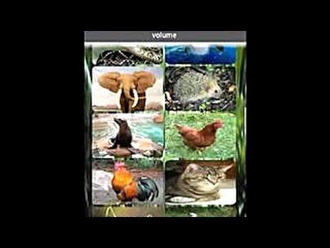 Video of Animal sound ringtones free