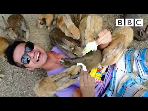 Rabbit Island - Nature's Weirdest Events: Series 4 Episode 2 Preview - BBC Two