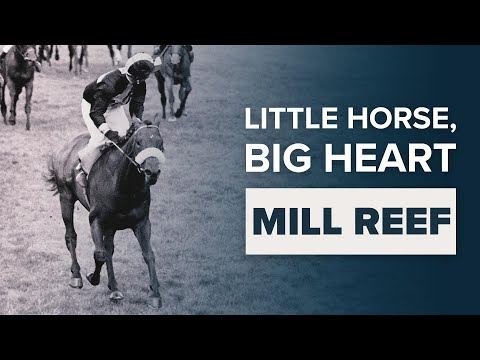 Mill Reef: The Little Thoroughbred Racehorse With A Big Engine
