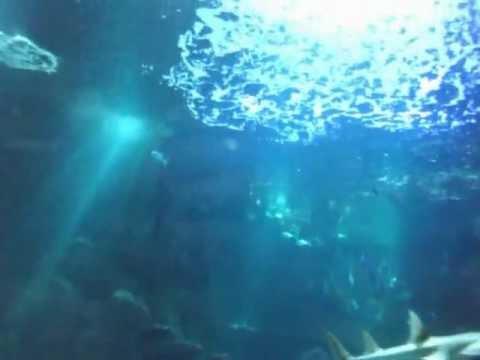 Aquarium de Paris au Trocadéro 1 ère partie