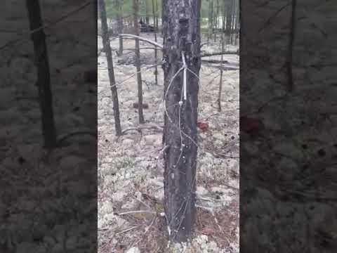 Grzybowy raj! Grzybiarz znalazł setki grzybów w jednym miejscu… film robi furorę w sieci.