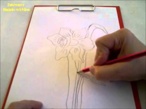 Zeichnen lernen für Anfänger. Frühlingsblume. Osterglocke. Narzisse malen