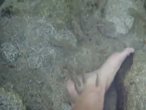 Fish eating the dead skin off of my feet in a the thermal waters of Baja Mexico