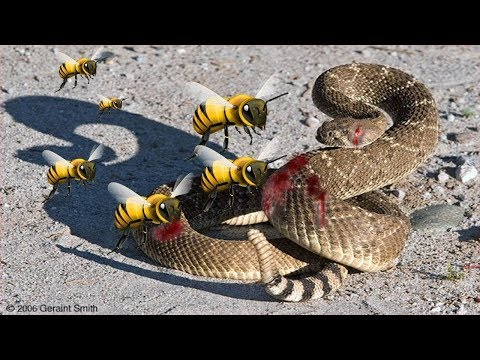 LIVE - The Best Attacks Of Wild Animals 2017 - Craziest Wild Animal Fights Caught On Camera