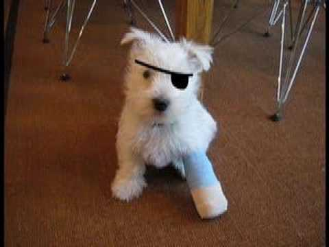 Adorable Puppy Injury!