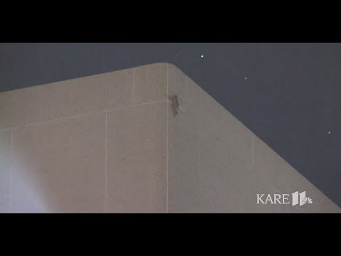 MPR raccoon makes it to the roof of UBS building in St. Paul