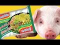اتحداك ان تأكل الاندومي بعد مشاهدة هذا الفيديو!! - indomie