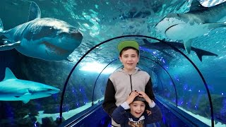Video VLOG - DANS LE TUNNEL DES REQUINS À MARINELAND 😱 MP3, 3GP, MP4, WEBM, AVI, FLV Mei 2017
