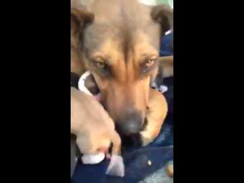 這只心碎的狗狗媽媽死也沒想到會再和狗寶寶見面,牠眼淚都掉下來那一幕大家都hold不住了…