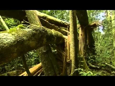 Documental  Selva Tropical, El Secreto De La Vida