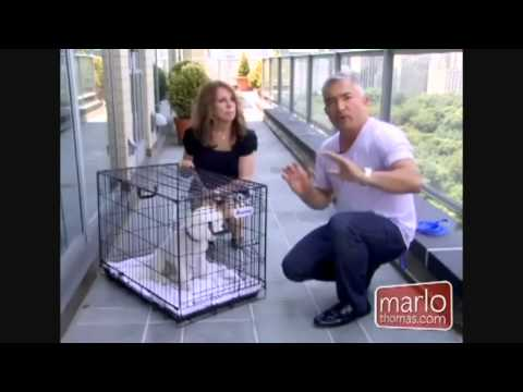 Crate Training Cesar Milan, Dog Whisperer