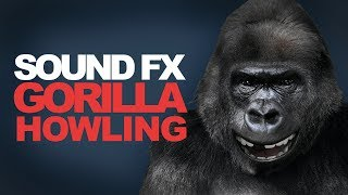 GORILLA HOWLING | Sound Effect [High Quality]