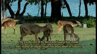Download Video Taman Nasional Ujung Kulon MP3 3GP MP4