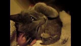 My cat,