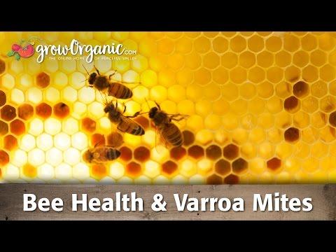 Beehive Varroa Mite Control