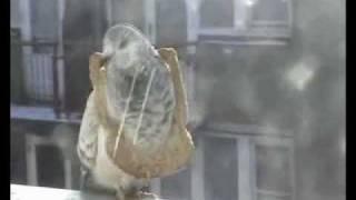 Video Holub