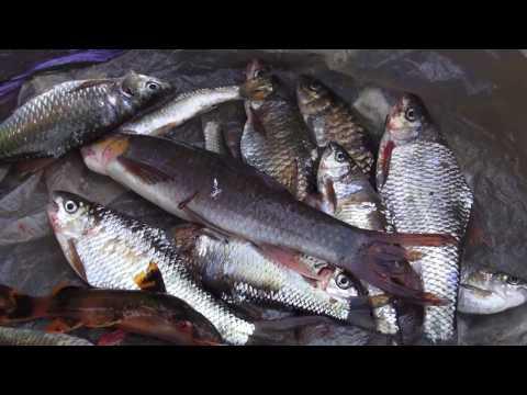 2015 Cuab Ntses Keem NajCuab. Rapid River adventure. p3/4 (HD)