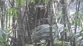Yos hav zoo nyob Nplog teb-39