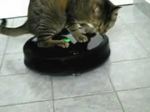 Cat riding the Roomba