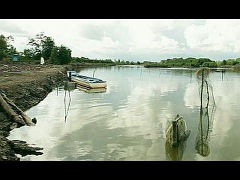 Mangroves & Markets: protecting the ecosystem (full documentary)
