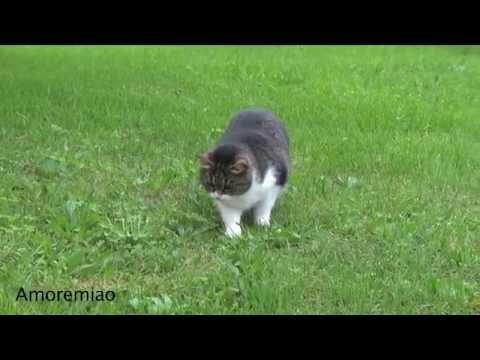 il gatto che caccia i fantasmi!