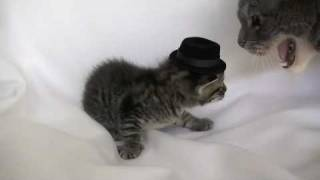 Кошачий дресс-код