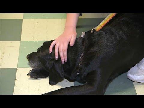 Hunde helfen Kindern vor Prüfungsangst - sie beugen Str ...