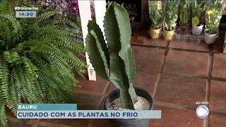 Cuidados com as plantas na pandemia têm ajudado a passar o tempo em casa