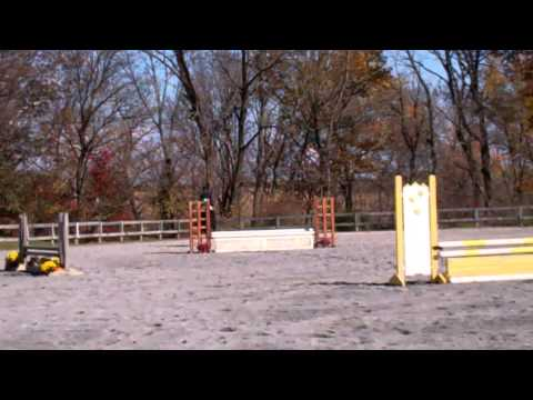 Ashley Bent's Winning Round in Intermediate Fences - 11/2/13