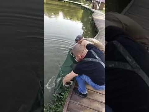 Видеоотчет о рыбалке за 28 августа 2021 г.
