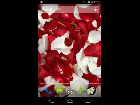 Video of Rose petals Live Wallpaper