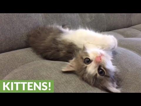 i-primi-3-mesi-della-gattina-in-3-minuti