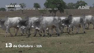 Leilão do Adir Goiás 13/10 11:00h