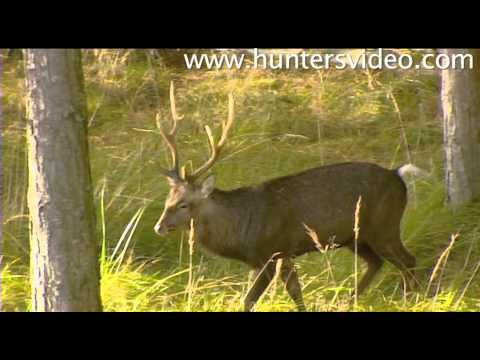 Rifle Hunting in Denmark - Hunters Video