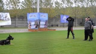 Nagyabonyi rendőrkutyaverseny - Szájkosaras blokkolás