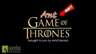 """Click here to SUBSCRIBE: https://goo.gl/tlCQJZOwning ant colonies is like watching Game of Thrones. As a tribute to the highly anticipated, up coming GOT season, we take a look at the epic and twisting stories of all the ant kingdoms of this channel. The plot twists will shock you! We also launch our ANTSCANADA ANT FLAG CONTEST to celebrate the 2 yr anniversary of the AC Ant Forum. See below for details!LINK to thread for flag submissions: http://forum.antscanada.com/viewtopic.php?f=30&t=3856Mechanics: Design a flag for any of our ant colonies on the channel and post it in the forum at the link above. NOTE: You need to register if you aren't already a member of the forum in order to post. You may submit flag entries for one, some, or all the colonies on the channel. The ant colonies are 1) The Fire Nation (Fire Ants), 2) The Dark Knights North & South (Black Crazy Ants) 3) The Golden Empire (Yellow Crazy Ants), 4) The Titans (Marauder Ants). 3 finalists will be selected for each colony and the AC Family will be able to vote for their favourite in a future video. The winner of each winning flag will win a FREE Omni Nest Small formicarium from our shop (winner must pay for customs fees if outside USA).Visit us at http://www.antscanada.com CLOSE CAPTIONING """"CC"""" available for this video. Please feel free to contribute to translating/CCing this video into another language: http://www.youtube.com/timedtext_cs_panel?tab=2&c=UCONd1SNf3_QqjzjCVsURNuAA brand new video is uploaded on this channel every Saturday at 8AM EST (with frequent bonus videos) so be sure to SUBSCRIBE to the channel to catch every ant video we release! Thank you for the support.List of Ant Equipment Used in this video:""""The Fire Nation"""" Solenopsis geminata Colony:•AC Outworlds https://goo.gl/SccvGn•AC Field & Forest Biome Kit https://goo.gl/2alaoo•AC Desert & Oasis Biome Kit https://goo.gl/0jXxr0•AC Rainforest Biome Kit https://goo.gl/13NSLj•Various AC Equipment https://goo.gl/oWs4Qs•Rubbermaid bin""""The Da"""