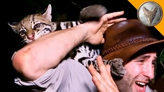Download Youtube: Ocelot ATTACK!