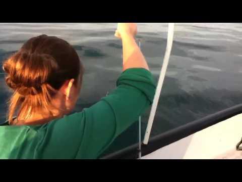 Название Видео - Рыбалка в Орджоникидзе (ставридка)