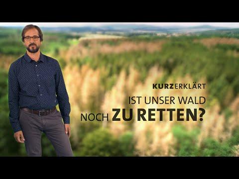 Ist der Wald noch zu Retten?