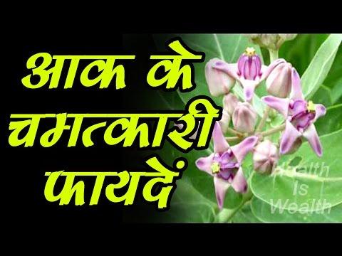 आक (मदार) के पौधे के जबरदस्त फायदे और चमत्कारिक घरेलु नुस्खे -Aak Ke Fayde 1