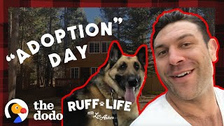 Lee Adopts 3 Dogs In 1 Day!   Ruff Life With Lee Asher by The Dodo