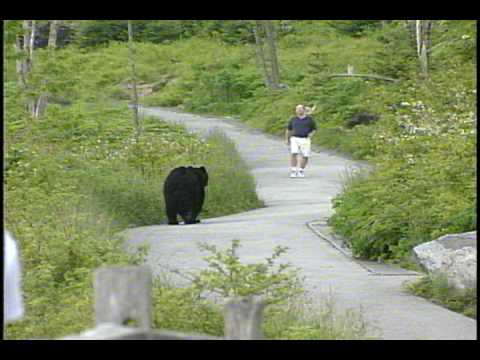 WLOS Bear chases man at Clingman's Dome in GSMNP