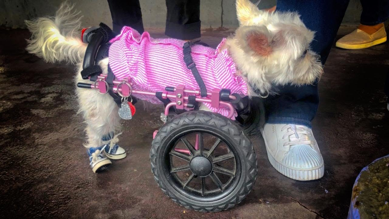 Dogs With Special Needs and Their Humans Celebrate For Good - YouTube