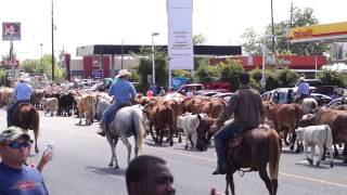 Dayton (TX) United States  city photos : Cattle Drive of 2015 - Dayton, TX