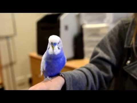 Bird Does the Best R2D2 Impersonation Ever