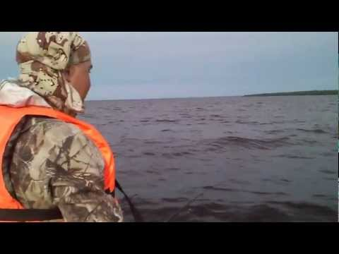 видео ловля рыбы на цикаду