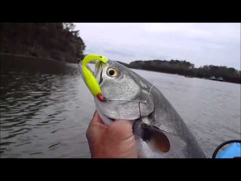Specks and Bluefish from a Kayak – Rudee Inlet, VA Apr 2013