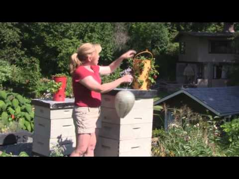 April 28/12 – Senga's Vlog – How to Deter Wasps From Your Bee Hives
