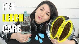 Pet Leech Care | Leeches As Pets | Medicinal Leech by Emzotic